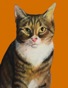 No Costume Orange Cat Splendid Beast- Big