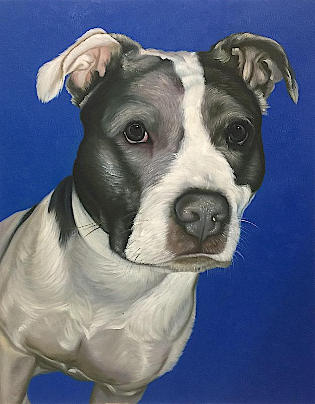 Dog Portrait with Blue Background