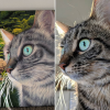 cheongsam cat painting before and after