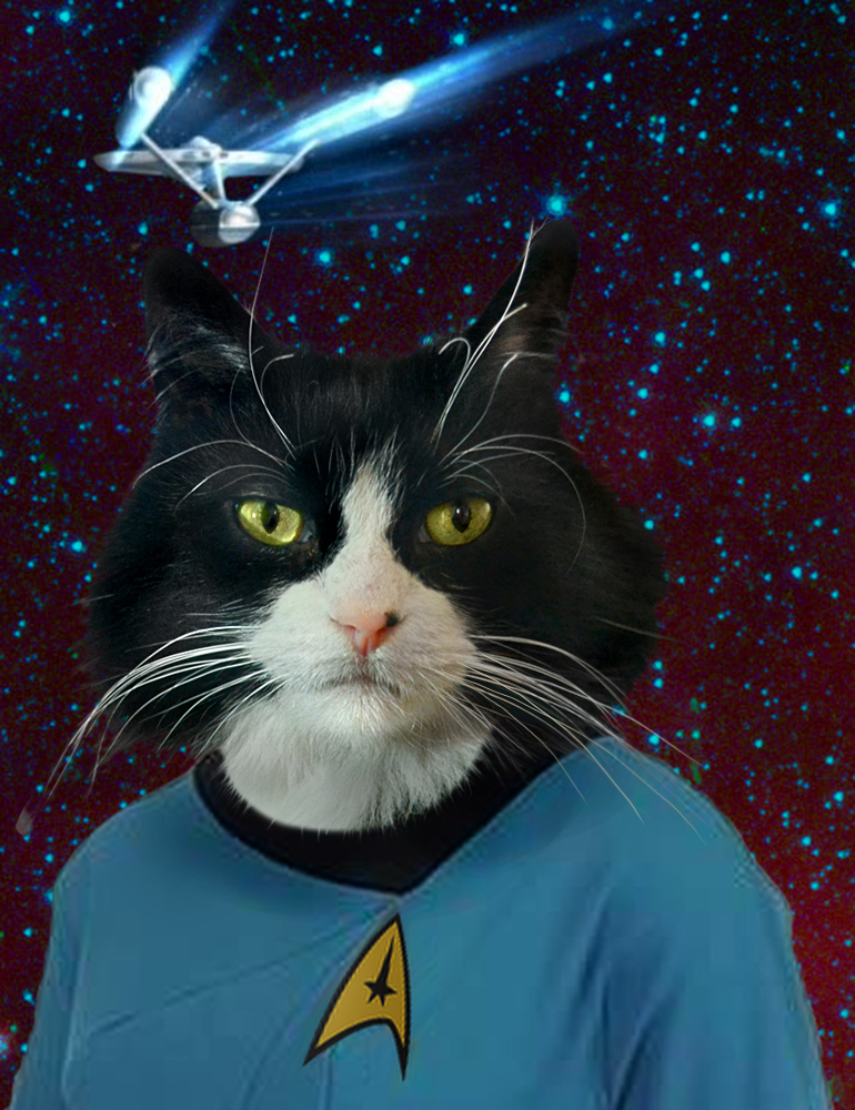 Cat Portrait Star Trek Oil Painting