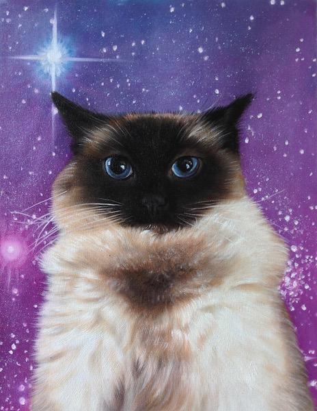 Portrait of Siamese Cat by Splendid Beast