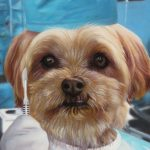 Dog Portrait Surgeon Doctor