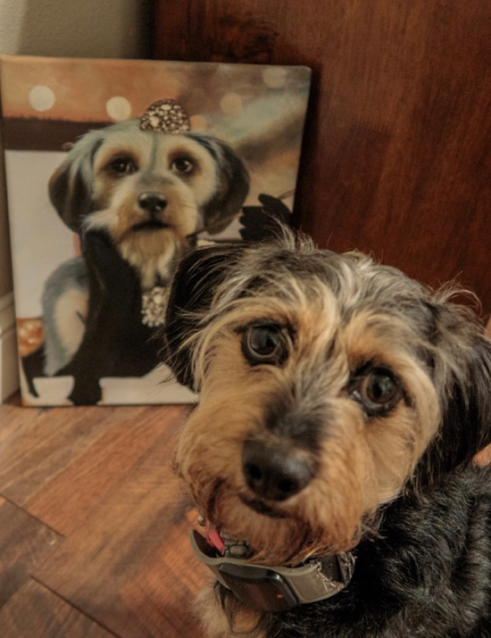 Dog next to her portrait as Audrey Hepburn