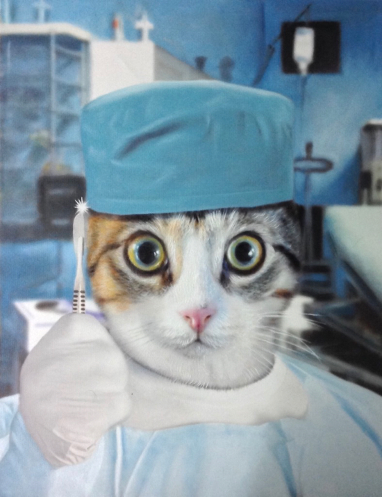 Cat Portrait as Surgical Doctor