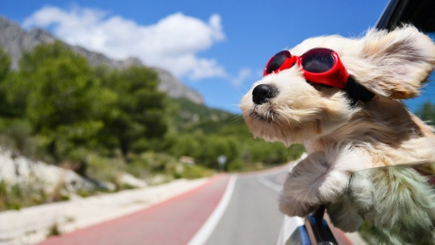 activities for dogs while traveling