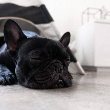 how to get a puppy sleep through the night
