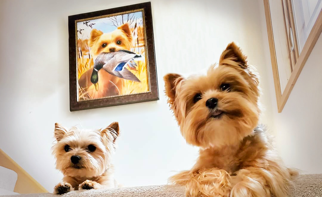 2 dogs with pet portrait