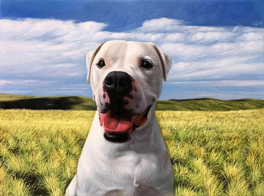 grassland dog portrait