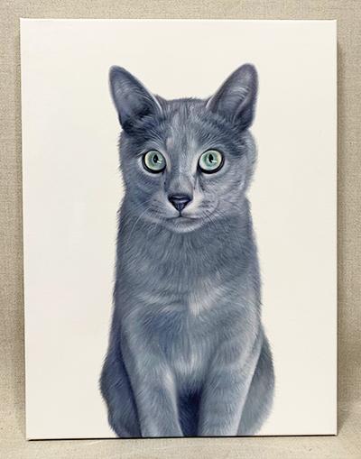 no costume cat pet portrait