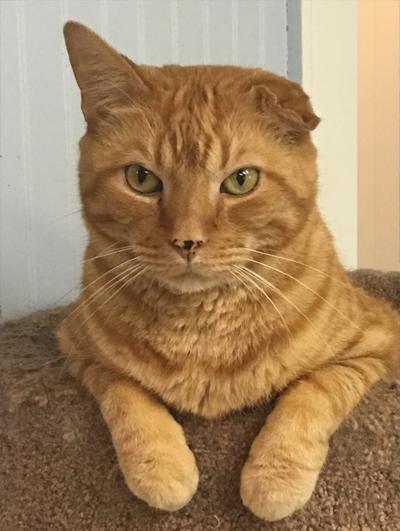 van gogh custom cat portrait